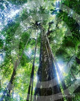 Corcovado jungle.jpg