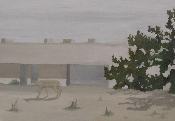 Renata De Bonis, Coyote walk, 70 X 100 c