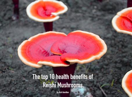 Reishi - King of the Mushrooms
