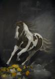 Arabian Horse II