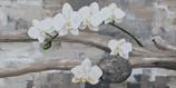 Zen witte orchideëen