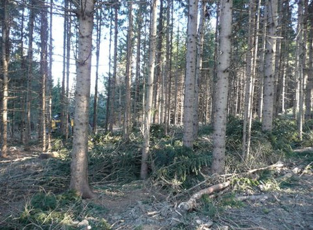 Selective Timber Harvests