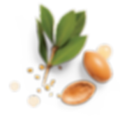 Herbal-Essences-Argan-Oil-Of-Morocco-Ing