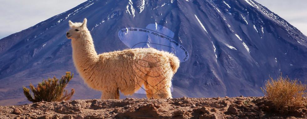 Vulcano Lincancabur, Atacama