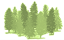 Forest Graphic3.png
