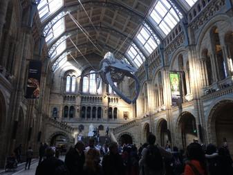Museum Overload