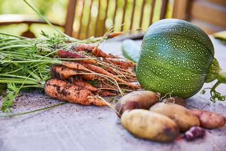 Gemüseanbau im Garten