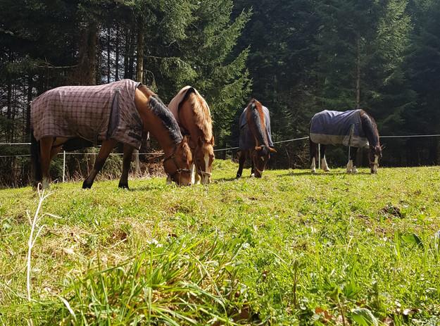 Mittagspause_Pferde.jpg