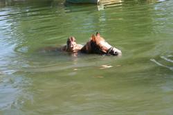 camp_halix_schwimmen