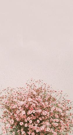 아이폰 배경화면, 봄 _ 네이버 블로그