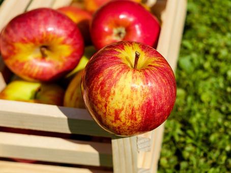 Äpfel im Winter und ihre Umweltbilanz