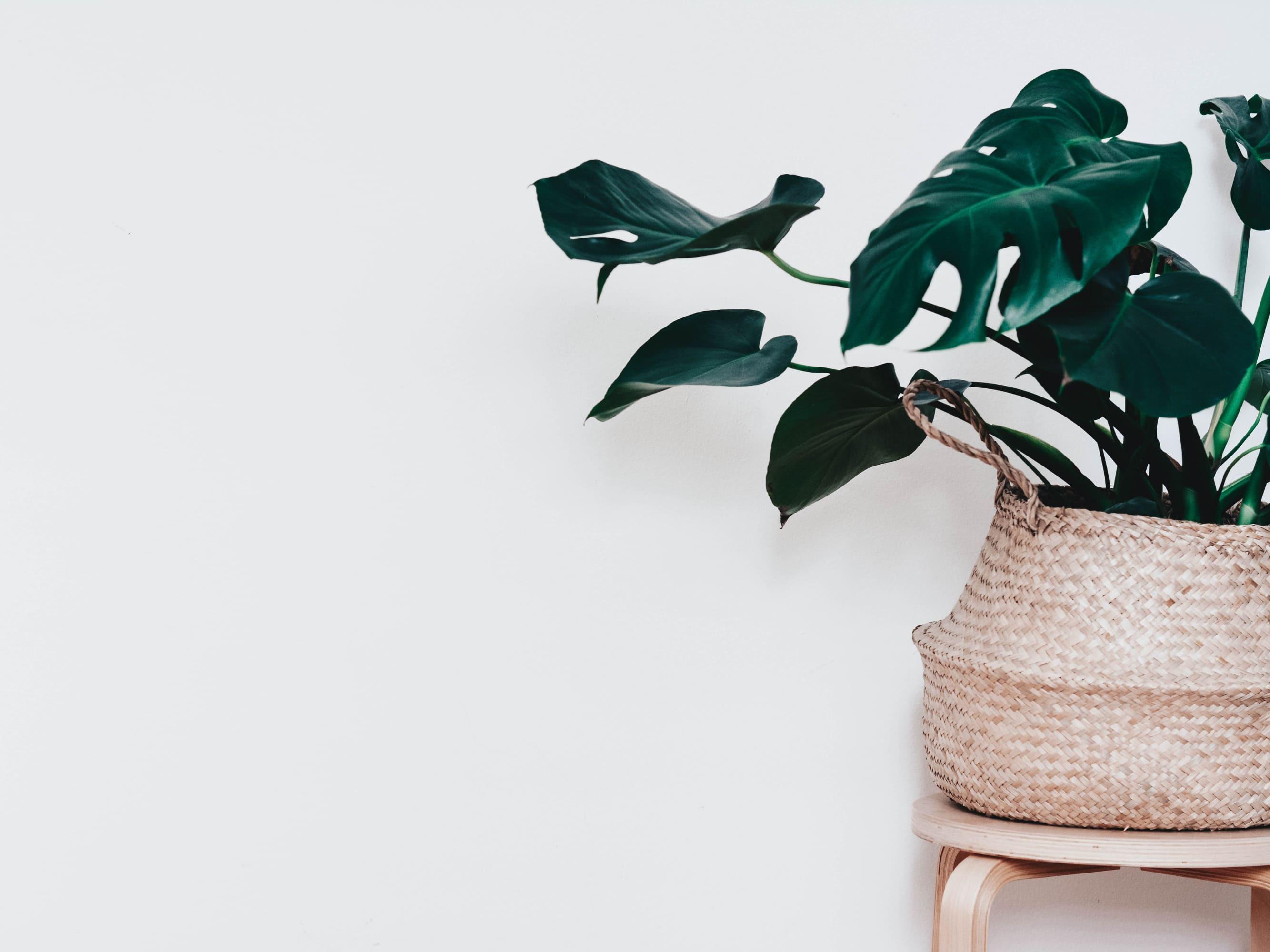 Online-Kurs: Green Living