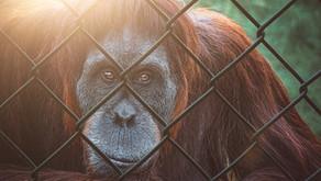 Alternativen zu Zoobesuchen