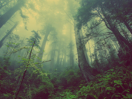 Wald im Klimawandel