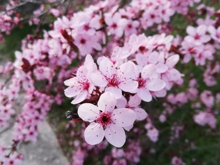 Ist euch aufgefallen wie stark die Bäume dieses Jahr blühen?