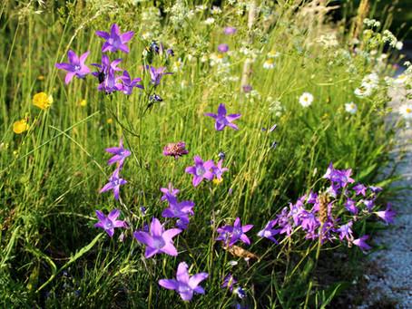Tipps für einen insektenfreundlichen Garten
