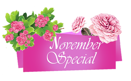 November sale png.png