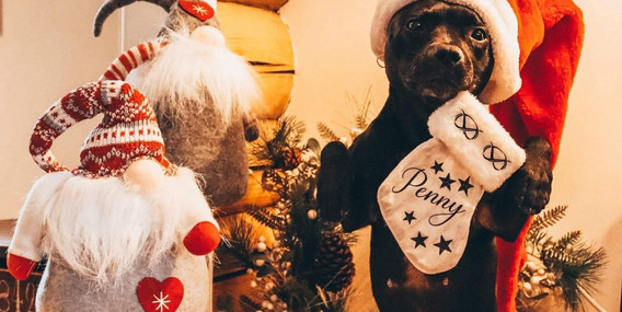 Juleglede hos Penny