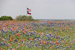texasfield.jpg