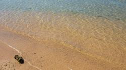 hotel beach fish