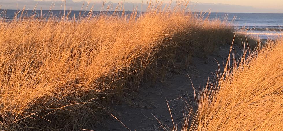 Classic Beach Path