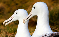 tours dunedin, otago peninsula wildlife, albatross colony dunedin tour, hire a car in port chalmers