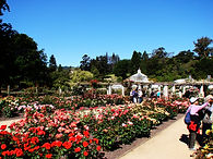 popular tours dunedin, otago peninsula, see what to do in dunedin, tour dunedin in a hire car or hire van, dunedin tours
