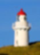 tours dunedin, rent a car from port chalmers, otago peninsula, taiaroa head, penguins, dunedin tours