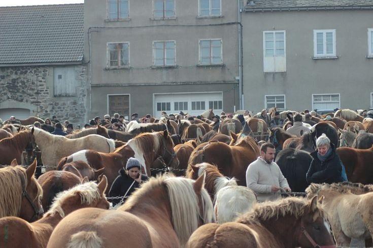 foire-aux-chevaux-fay-sur-lignon-traditi