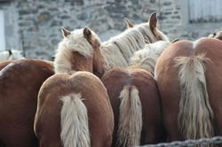 foire-chevaux-octobre-fay-sur-lignon