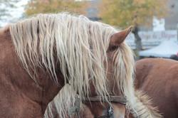 foire-aux-chevaux-fay-sur-lignon