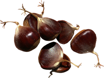 chestnuts_edited.png
