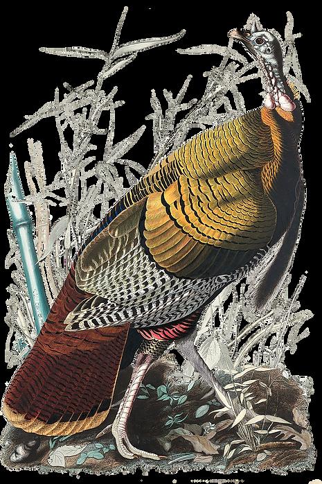 american turkey.png