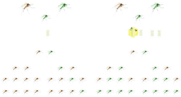 Gene Drive Mosquitos no background.png