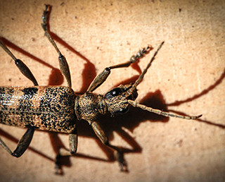 169-Insecte  Louis Bour.jpg