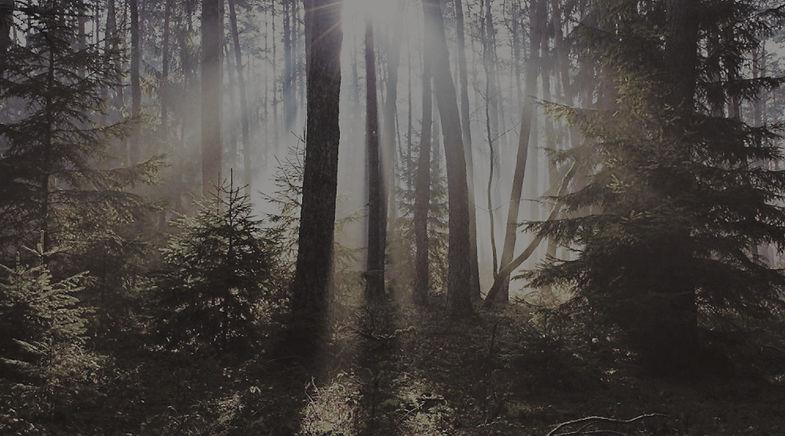 woods-background_edited.jpg