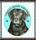 Welcome to the Carolina Helping Paws Blog!