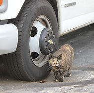 Mom the cat at the NH Blacktop Sealers office in Auburn photogaphed by Brandon Latham