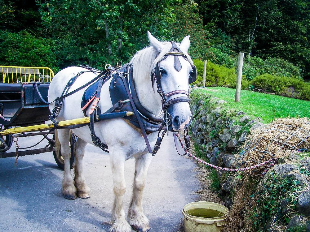 Welsh Folk Museum St Fagans - John Oyston