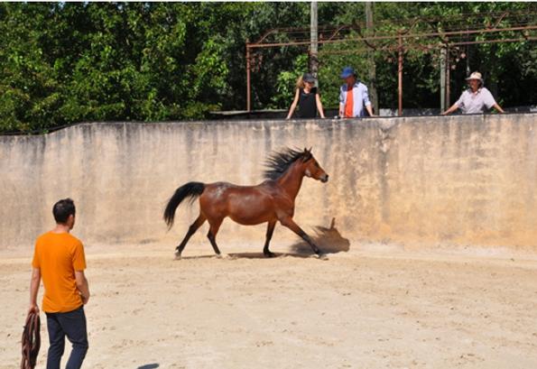 cheval énergies 01.PNG