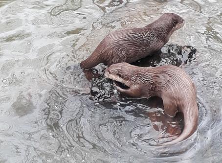 Otterly beautiful!