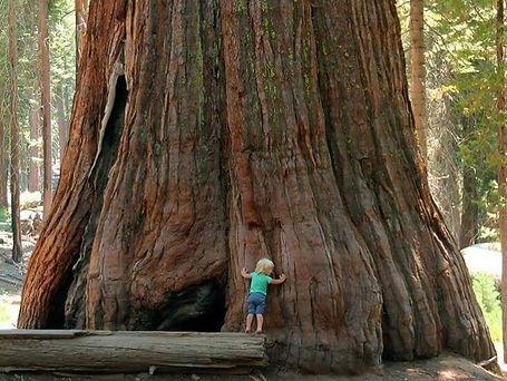 Tree hugging_edited_edited.jpg