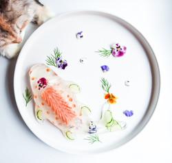 Codi Koi fish
