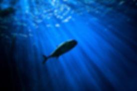 WB_Fish.jpg