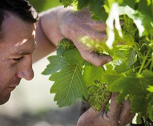 vineyard-2-1200x987-2.jpg