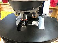 顕微鏡標本.jpg