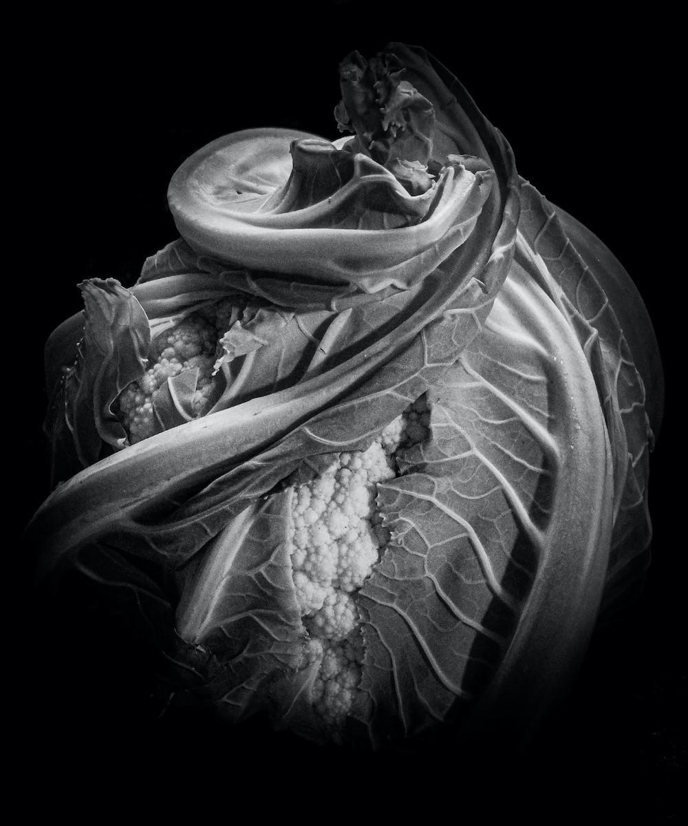 MONO - Chou-Fleur by Andrew Cameron-Mitchell (7 marks)