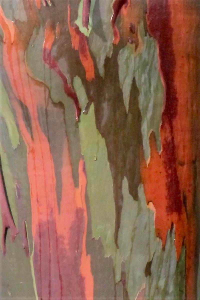 PDI - Tree Bark by Elizabeth Marsh (9 marks)