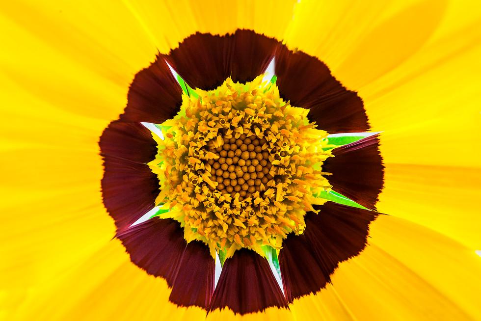 COLOUR - Flower Power by Kieran Casey (8 marks)