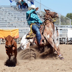 Cowboy roping a calf in a rodeo.jpg